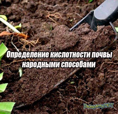 Определение кислотности почвы народными способами (2015) WebRip